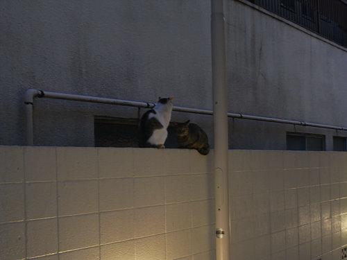 寒い中会議中の猫